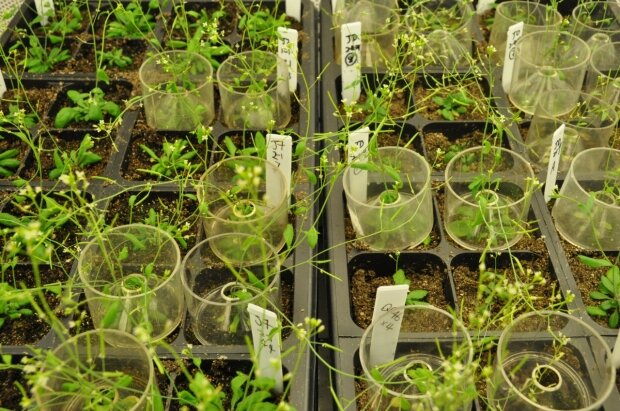 Biologists uncover molecular link between nutrient availability growth