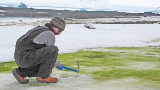 Climate change will turn coastal Antarctica green say scientists
