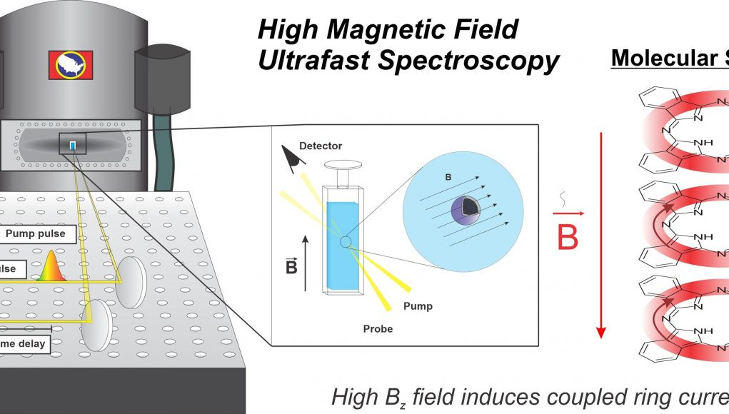 Scholes finds novel magnetic field effect in diamagnetic molecules scaled