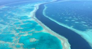 Scientists successfully develop heat resistant coral to fight bleaching