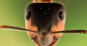 An ant inspired approach to mathematical sampling