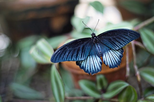 Armor on butterfly wings protects against heavy rain
