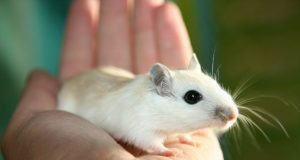 Common food additive causes adverse health effects in mice