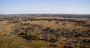 Hunting in savanna like landscapes may have poured jet fuel on brain evolution