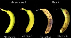 MIT startup wraps food in silk for better shelf life