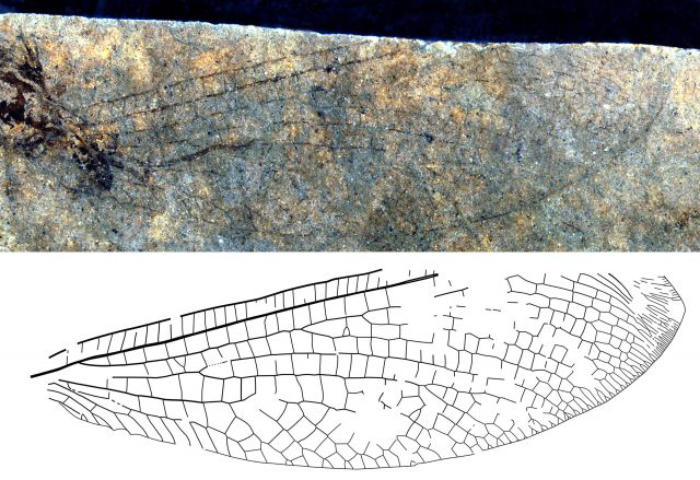New fossil discovery shows 50 million year old Canada Australia connection