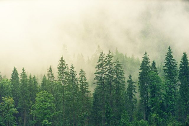Planting new forests is part of but not the whole solution to climate change