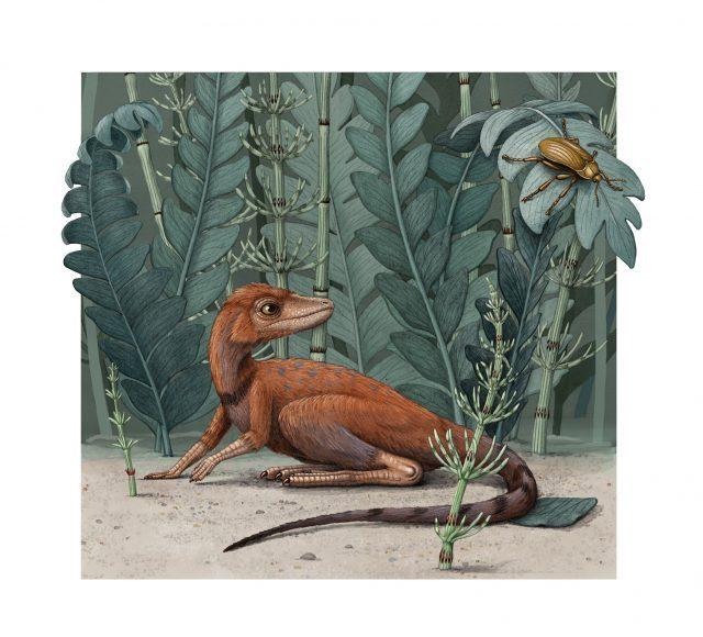 A tiny ancient relative of dinosaurs and pterosaurs discovered