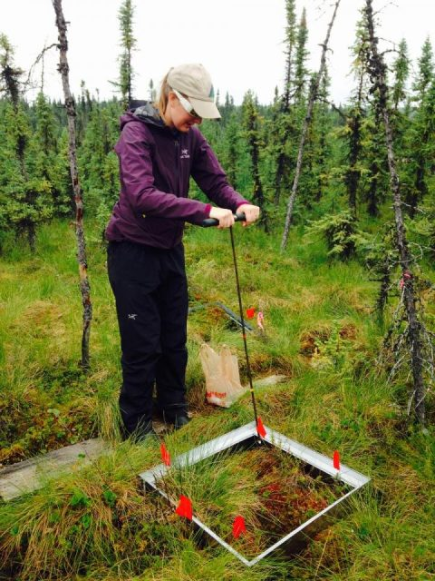 Alaska is getting wetter. Thats bad news for permafrost and the climate