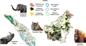 Certified sustainable palm oil fields endanger mammal habitats and biodiverse tropical forests over 30 years