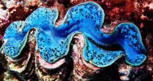 Giant clams manipulate light to assist their symbiotic partner