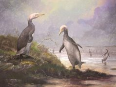 New Zealands ancient monster penguins had northern hemisphere doppelgangers