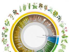New global study reveals time tree of Earths flowering plants