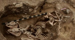 The most ancient evidence of horsemanship in the bronze age