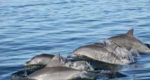 Young dolphins pick their friends wisely