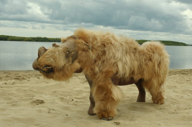 Ancient genomes suggest woolly rhinos went extinct due to climate change not overhunting