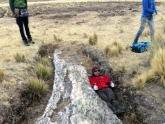 Fossil trees on Perus Central Andean Plateau tell a tale of dramatic environmental change