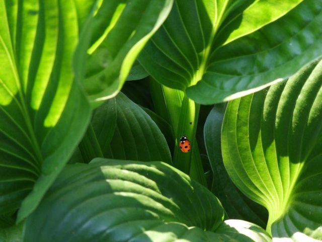How plants shut the door on infection