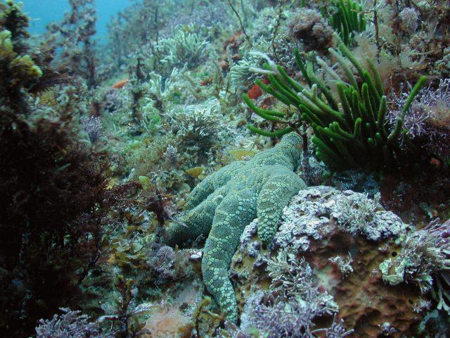 Marine food webs under increasing stress