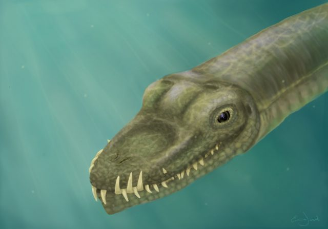 Super long necked reptiles lived in the ocean not on land
