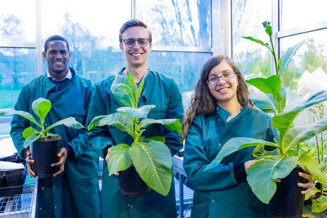 Third breakthrough demonstrates photosynthetic hacks can boost yield conserve water