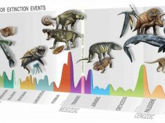 Discovery of a new mass extinction 1