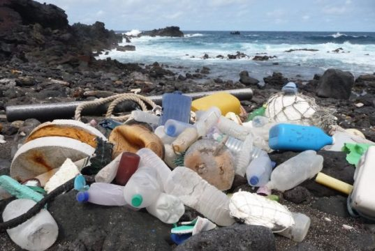 Ecologists sound alarm on plastic pollution 1