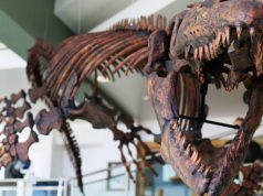 Jaws of deat Paleontologist renames giant prehistoric marine lizard