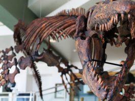 Jaws of deat Paleontologist renames giant prehistoric marine lizard