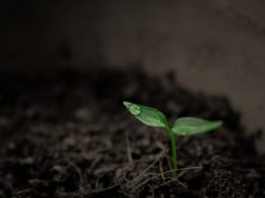 Researchers quantify worldwide loss of phosphorus due to soil erosion for the first time