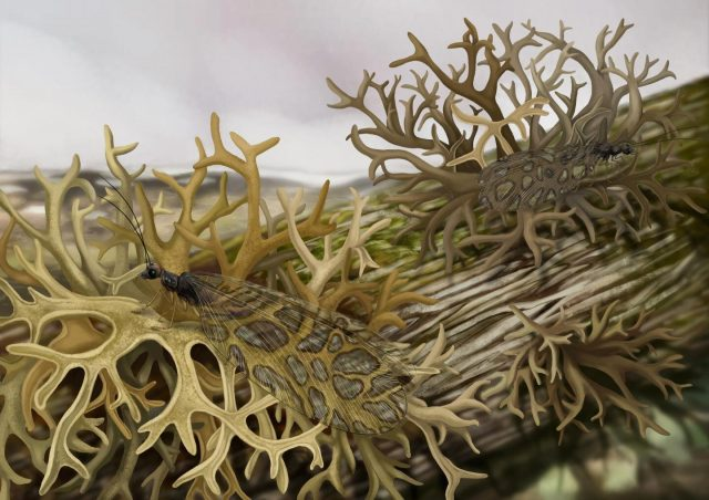 Scientists discover earliest fossil evidence of an insect lichen mimic