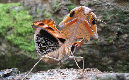 Scientists shed light on how praying mantises use the element of surprise to survive