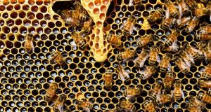 Two pesticides approved for use in US harmful to bees 1