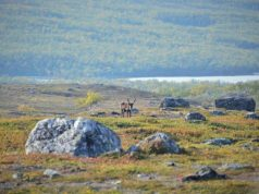 Warming temperatures are driving Arctic greening