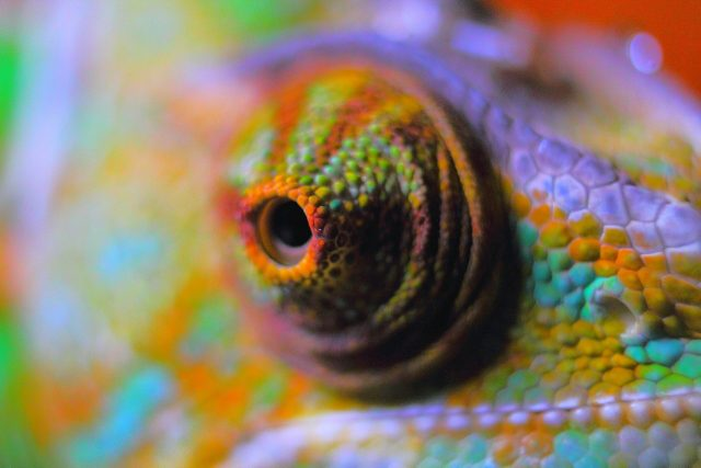 A flexible color changing film inspired by chameleon skin