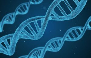 A newly discovered protein repairs DNA