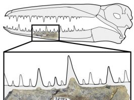 Antarctica yields oldest fossils of giant birds with 6.4 meter wingspans
