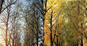 Human biology registers two seasons not four study suggests