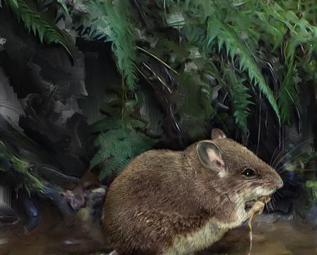 New species of aquatic mice discovered cousins of one of the worlds rarest mammals