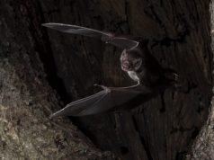 Vampire bats social distance when they get sick