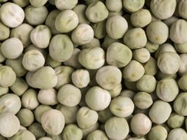 Wrinkled super pea could be added to foods to reduce diabetes risk