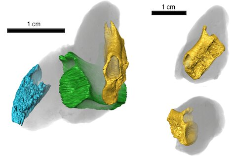 Fossil poop shows fishy lunches from 200 million years ago