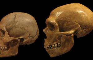 Genetic research reveals Neanderthals could tolerate smoke plant toxins