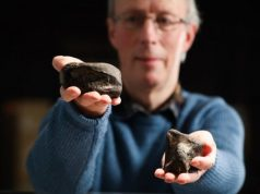 Irelands only dinosaurs discovered in Antrim