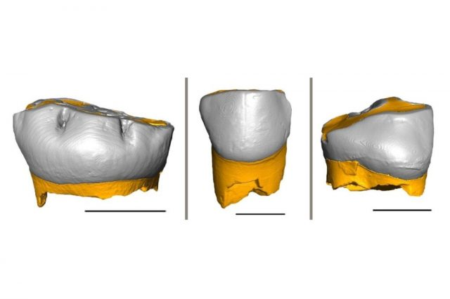 Neanderthal children grew and were weaned similarly to modern humans