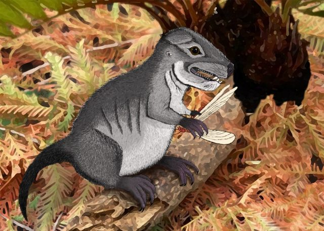 New species of ancient cynodont 220 million years old discovered
