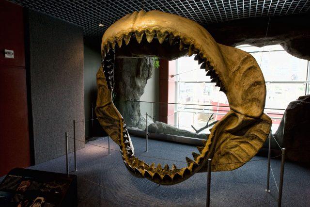 Prehistoric mega shark raised its young in nurseries study