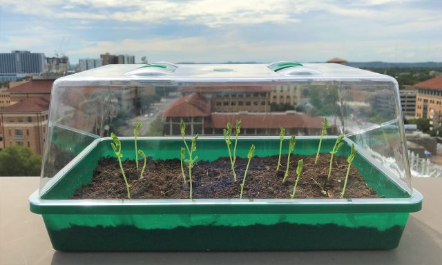 Self watering soil could transform farming