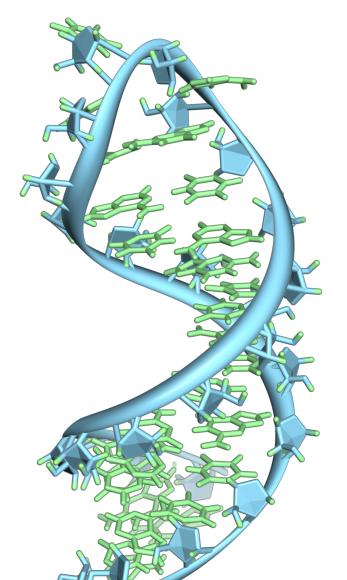 Study revealing the secret behind a key cellular process refutes biology textbooks