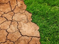 Warming of 2 C would release billions of tons of soil carbon